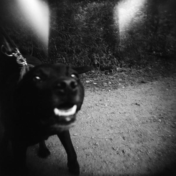 Hunden Monnie viser tænder. Der er 2 store hvide pletter over hundens hoved, som skyldes lys-utætheder i kameraet